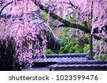 kyoto  japan   07 april 2017 ... | Shutterstock . vector #1023599476