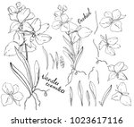 isolated orchid vanda on white. ... | Shutterstock .eps vector #1023617116