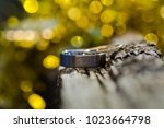 wedding rings. close up | Shutterstock . vector #1023664798