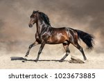bay stallion with long mane run ... | Shutterstock . vector #1023673885
