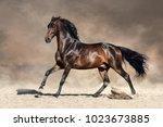 bay stallion with long mane run ...   Shutterstock . vector #1023673885