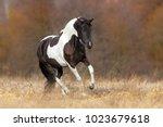Beautiful Piebald Horse...