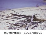Dried Branch On The Shore Of...
