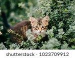 lonely little kitten hiding in...   Shutterstock . vector #1023709912