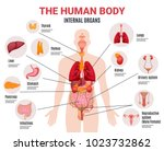 Human body internal organs schema flat infographic poster with icons images names location and definitions vector illustration