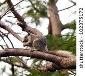 Squirrel sitting on tree - stock photo