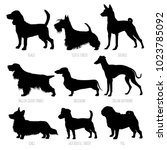 dog breeds silhouettes set.... | Shutterstock .eps vector #1023785092
