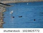little egret  egretta garzetta  ...   Shutterstock . vector #1023825772