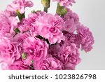 Pink Carnation Mother's Day