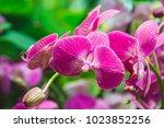 Beautiful Pink Orchid Flower Green - Fine Art prints