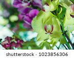 beautiful yellow and pink... | Shutterstock . vector #1023856306