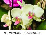 beautiful yellow and pink... | Shutterstock . vector #1023856312