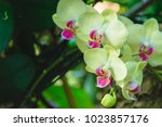 beautiful yellow and pink... | Shutterstock . vector #1023857176