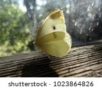 Butterfly On The Window