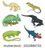 chameleon lizard  green iguana  ... | Shutterstock .eps vector #1023886732