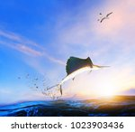 blue  black marlin fish jumping ... | Shutterstock . vector #1023903436