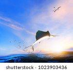 blue  black marlin fish jumping ... | Shutterstock . vector #1023903436