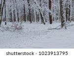 forest park after snowfall. all ...   Shutterstock . vector #1023913795