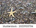 seashells and starfish on the... | Shutterstock . vector #1023933706