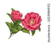 flowers. vector illustration | Shutterstock .eps vector #1023984952