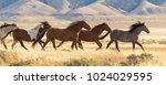 Stock photo wild horses running 1024029595
