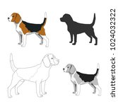 dog breeds isolated on white...   Shutterstock .eps vector #1024032322