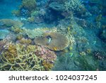 tropical fish and table coral....   Shutterstock . vector #1024037245