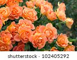 Stock photo beautiful summer bunch of flowers 102405292