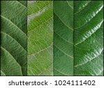 detailed leaf veins backgrounds. | Shutterstock . vector #1024111402