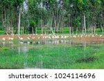 huge flock of great white...   Shutterstock . vector #1024114696