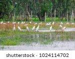 huge flock of great white...   Shutterstock . vector #1024114702