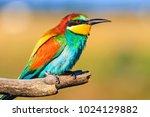 beautiful spring bird sits on a ... | Shutterstock . vector #1024129882
