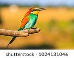 beautiful bird sitting on a... | Shutterstock . vector #1024131046