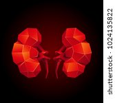 red low poly human kidneys on a ... | Shutterstock .eps vector #1024135822