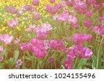 flowerbed of dark and light... | Shutterstock . vector #1024155496