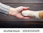 Stock photo female hand with cat paw on grey background 1024210105