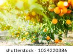 summer  background. orange... | Shutterstock . vector #1024220386