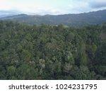 tropical rainforest landscape... | Shutterstock . vector #1024231795