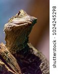 lizards close up macro shots... | Shutterstock . vector #1024245298