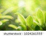 closeup nature view of green...   Shutterstock . vector #1024261555