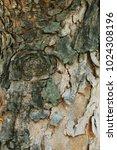 tree bark suitable for... | Shutterstock . vector #1024308196