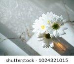white gerbera in glass vase on... | Shutterstock . vector #1024321015