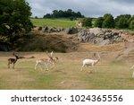 Bradgate Park  Leicestershire...