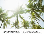 palm trees in the sunny day... | Shutterstock . vector #1024370218