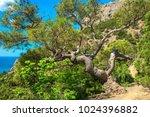 beautiful summer sea landscape...   Shutterstock . vector #1024396882