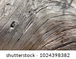 natural wooden texture of the...   Shutterstock . vector #1024398382