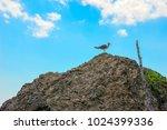 sea bird seagull sitting on a...   Shutterstock . vector #1024399336
