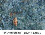fossil shells on the rock  sea... | Shutterstock . vector #1024412812