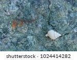 fossil shells on the rock  sea... | Shutterstock . vector #1024414282