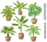 potted tropical plants set. ... | Shutterstock .eps vector #1024424182